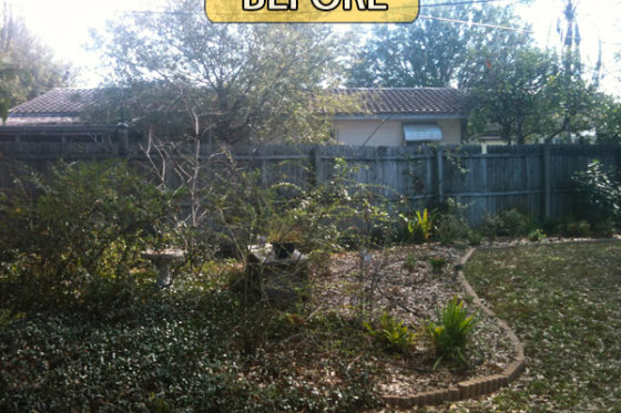 Landscaping Clearing